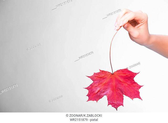 Skincare. Hand with maple leaf as symbol red dry capillary skin