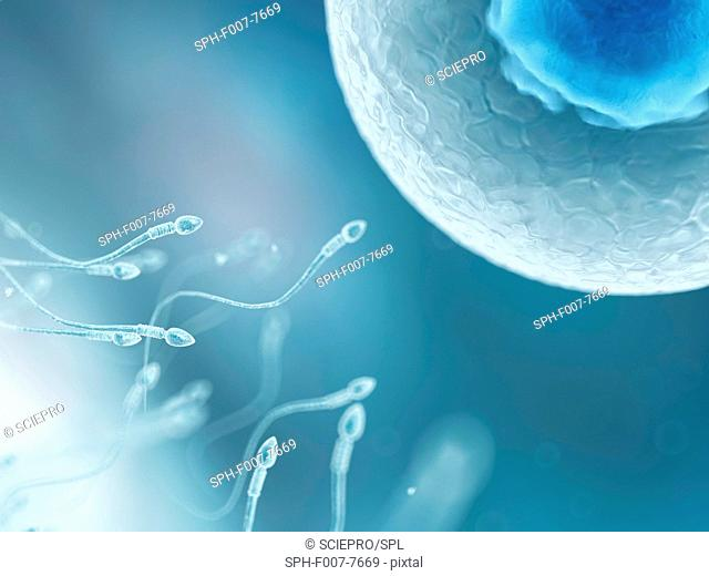 Egg and sperm, computer artwork