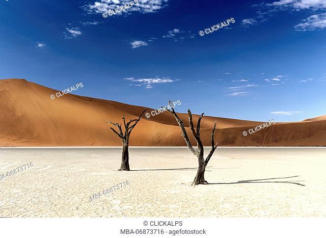 trees of Namibia, namib-naukluft national park, Namibia, africa
