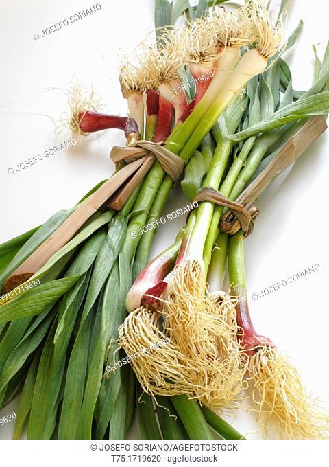 garlic, youngest