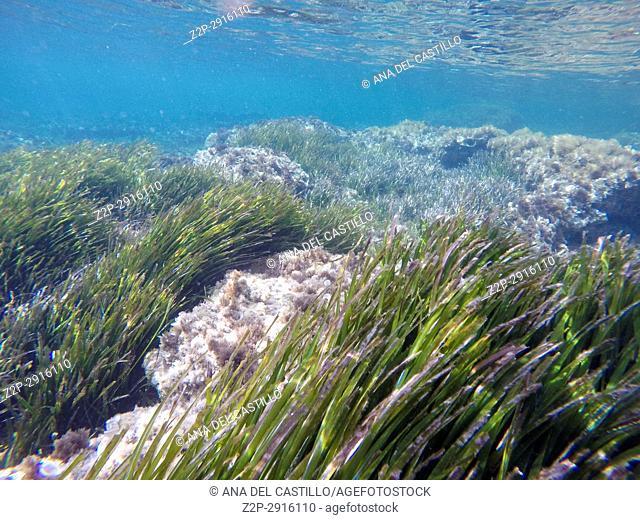 Underwater shoot in Cabo de Palos Murcia Spain. Posidonia Oceanica