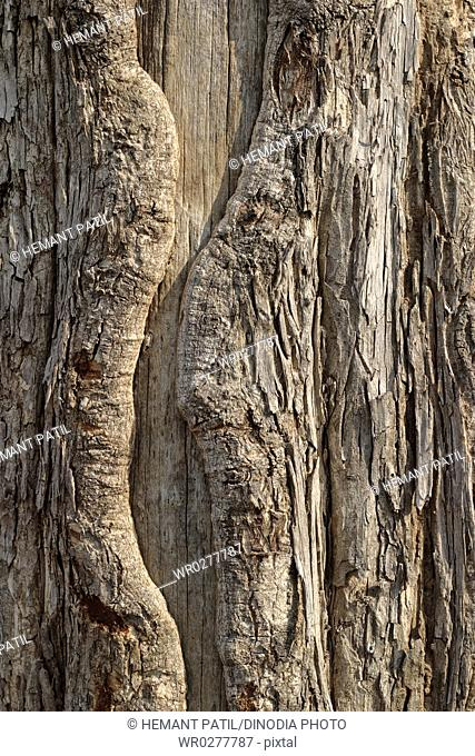 Tree trunk , texture