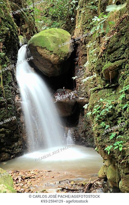 Small river, Monteverde, Costa Rica