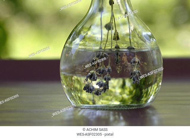 Lavender oil in bottle, close-up