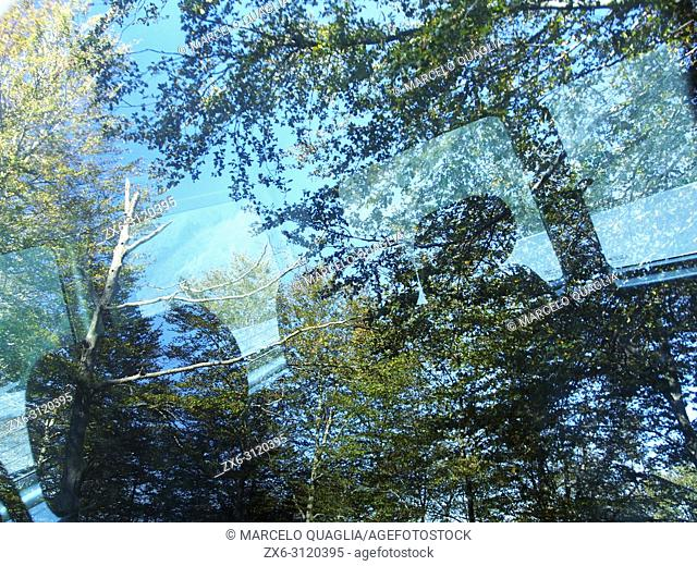 Beech forest reflections on car window. Montseny Natural Park. Barcelona province, Catalonia, Spain