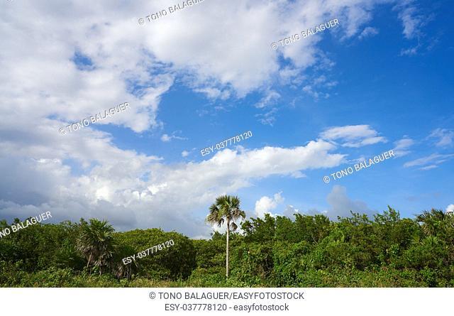 Cozumel island San Martin beach palm trees Riviera Maya of Mexico
