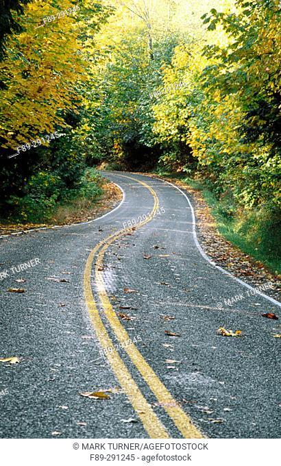 Highway curves through forest with autumn foliage. Whatcom County. Washington, USA
