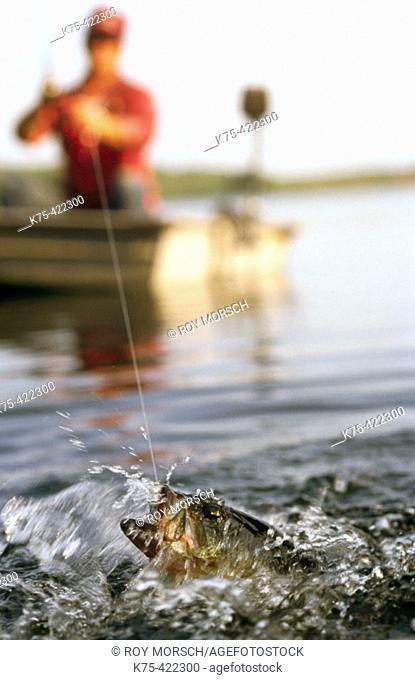 Largemouth Bass on bait tail jig