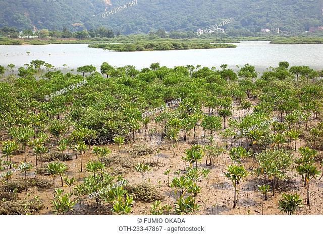 Mangrove at Tai O, Hong Kong