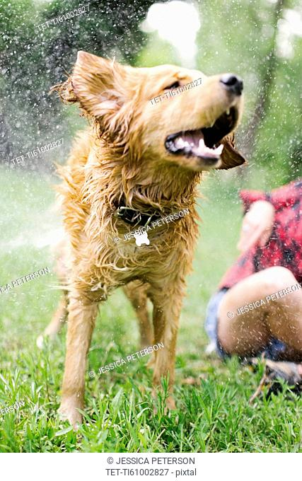 Dog shaking off water in park