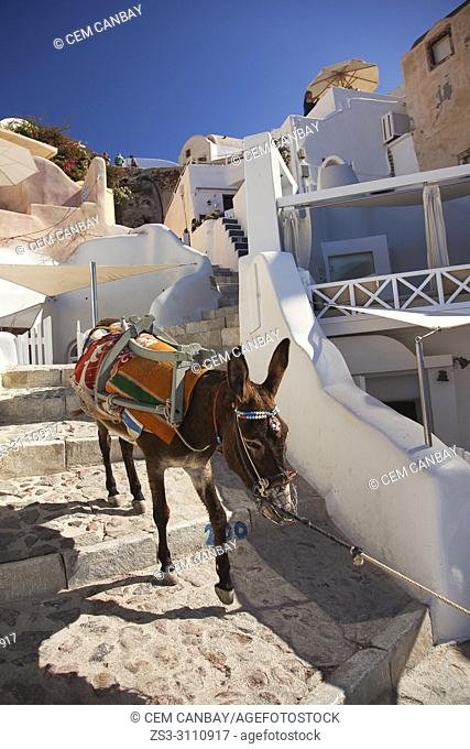 Donkey going down the stairs in Oia village, Santorini, Cyclades Islands, Greek Islands, Greece, Europe