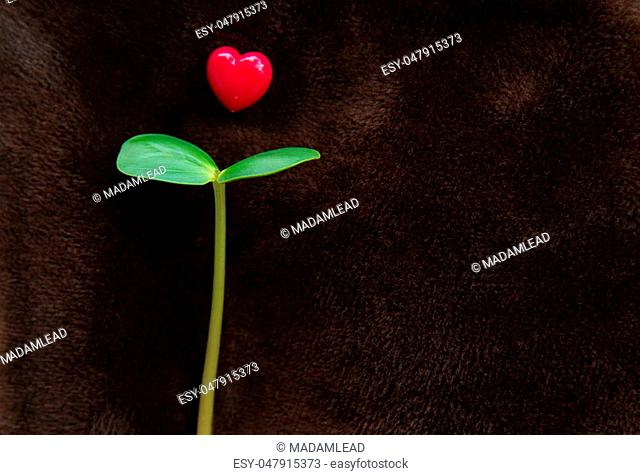 young seed plant with red heart on brown velvet background