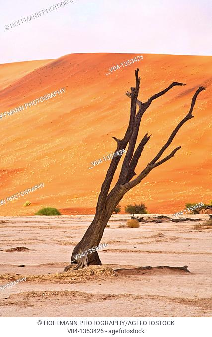 Dead tree in the Dead Vlei, Namib Naukluft Park, Namibia, Africa