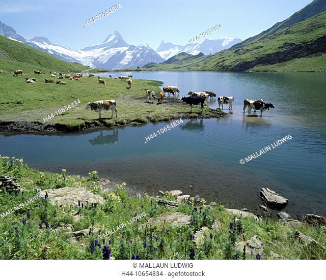 10654834, alpine, Alps, brook alp, lake, sea, mountains, mountain lake, Bernese Oberland, Finsteraarhorn, Grindelwald, canton