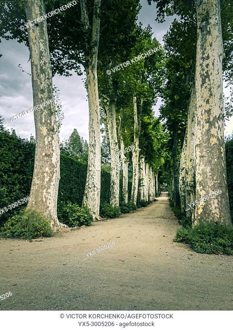 Alley in Boboli Gardens, Florence, Italy