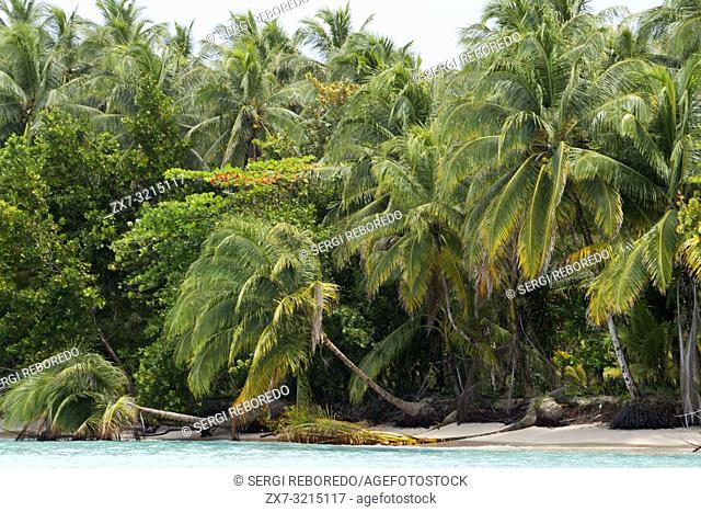 Bocas del Toro, Caribbean sea, Zapatillas Keys, Panama. Tropical beach island with leaning coconut tree and a boat, Caribbean sea, Zapatillas Keys