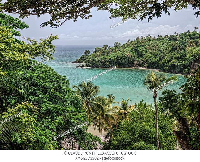 Tropical forest, Samana, Dominican Republic