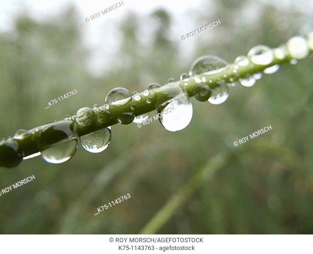 Drops of water on blade of grass