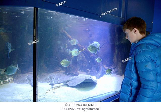 Aquarium, Besucher, Zoo, Breslau, Niederschlesien, Polen