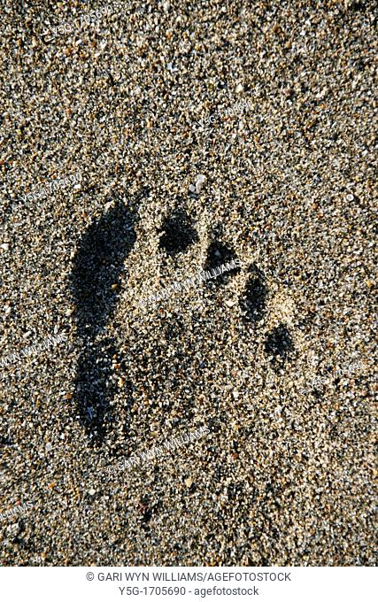 one person's footprint in sand on beach coast by sea
