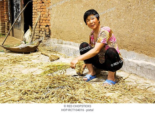 Mature woman extracting grain from rice paddy, Zhigou, Shandong Province, China