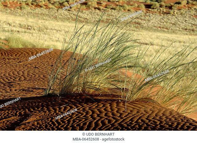 Africa, Namibia, NamibRand Nature Reserve, view of Wolwedans on the Namib