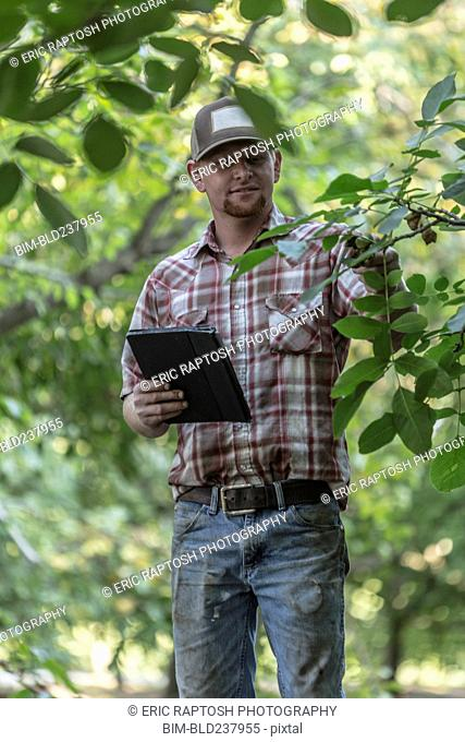 Caucasian man holding digital tablet checking walnuts in orchard