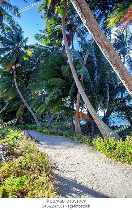 Belize, Half Moon Caye, path