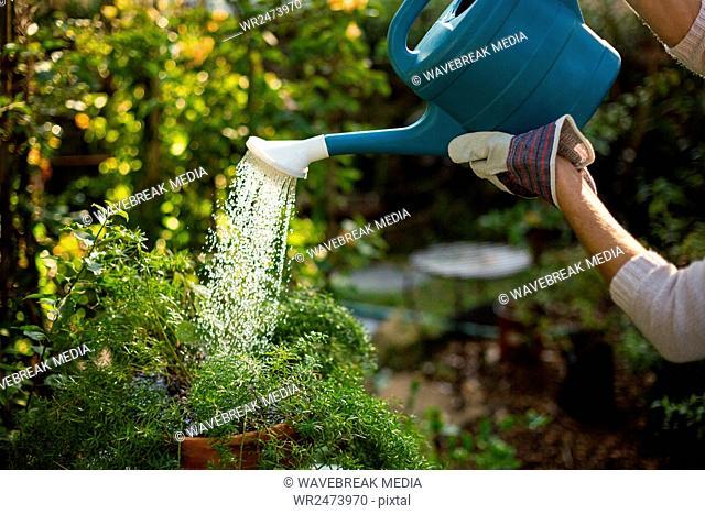 Cropped image of gardener watering plants
