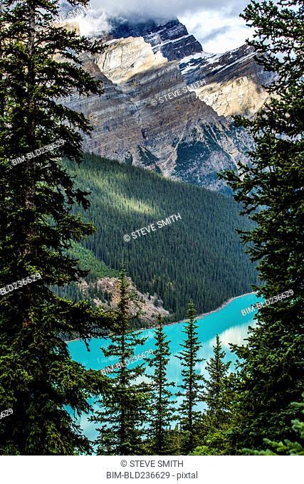 Trees over mountain lake