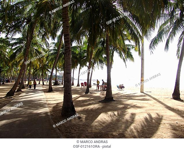 alagoas palm trees natural on the beach
