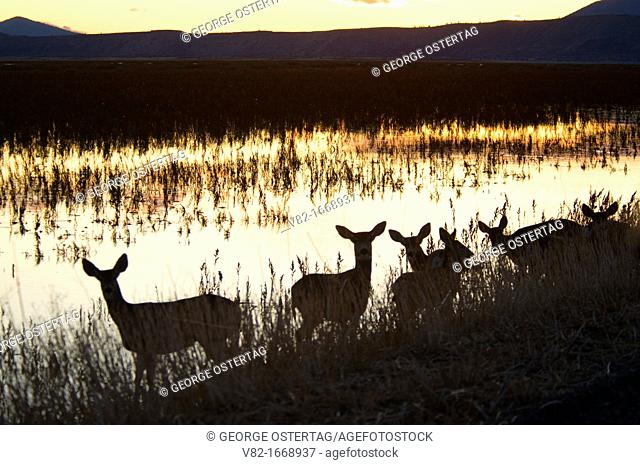 Deer silhouette on Sump 1-B, Tule Lake National Wildlife Refuge, California