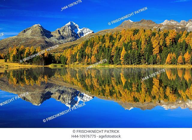 Alps, Alpine, panorama, mountain, mountains, massif, mountain lake, mountains, summit, peak, Graubünden, Grisons, autumn, colors, wood, Lej da Staz, larch