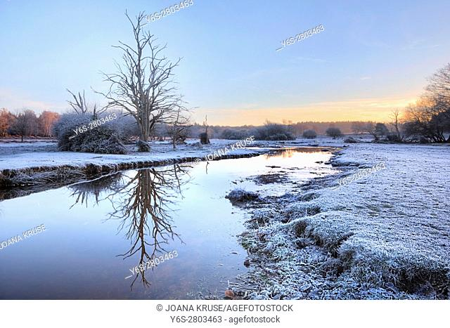 a frosty morning at Mill Lawn Brook, Lyndhurst, New Forest, Hampshire, England, UK