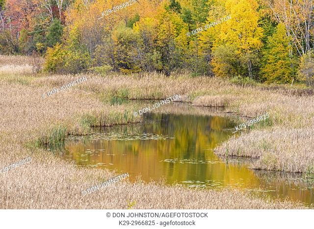 Autumn aspens on a hillside reflected in Lily Creek, Greater Sudbury, Ontario, Canada