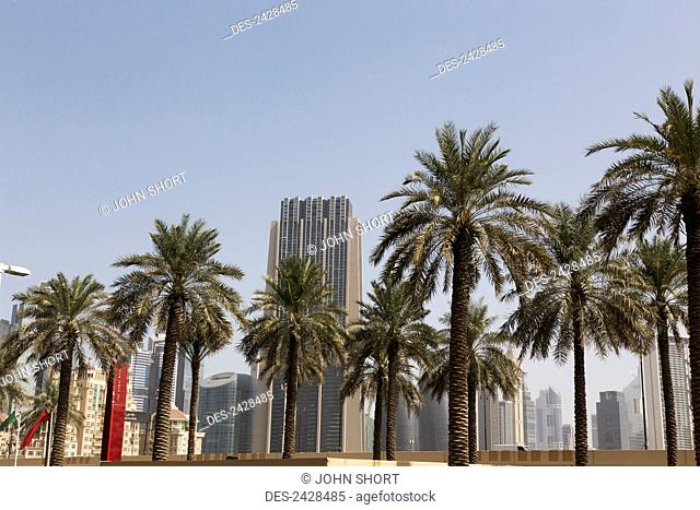 Palm trees in a row with skyscrapers and blue sky in the background; Dubai, United Arab Emirates
