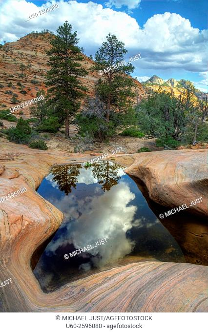 The landscape is reflected in the still waters of the potholes on the Many Pools Trail at Zion National Park, Utah