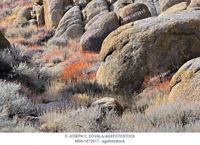 Granite boulders and scrub, Alabama Hills, California, USA