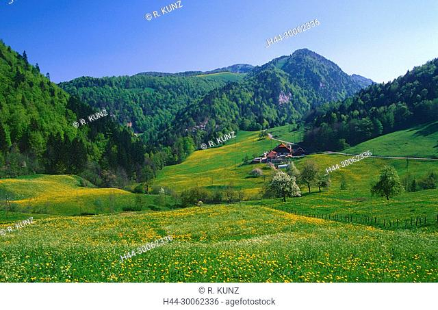 Farm house, blooming meadows, jurassic mountains, spring, Envelier, near Vermes, Canton of Jura, Switzerland