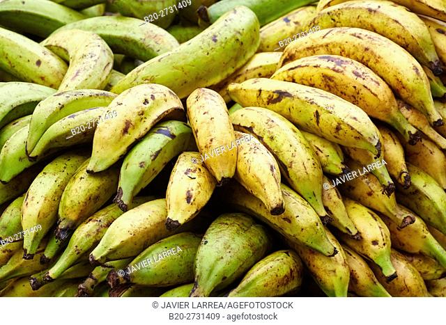 Bananas, Fruits, Cartagena de Indias, Bolivar, Colombia, South America