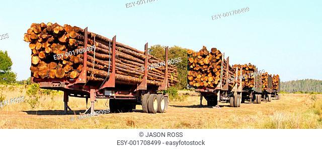 Logging Trailers - Florida