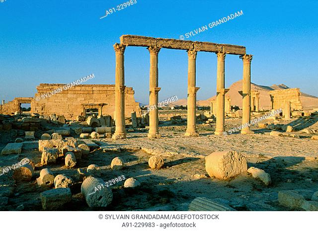 Palmyra ruins, remains of the 1200 m. colonnade edging the 'cardo' (main road in Roman cities). Syria