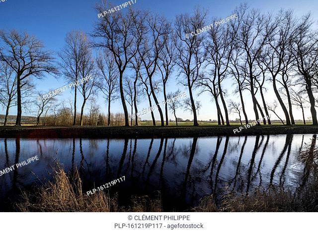 Silhouettes of leaning poplar trees bordering canal Damse Vaart in winter near Damme, West Flanders, Belgium