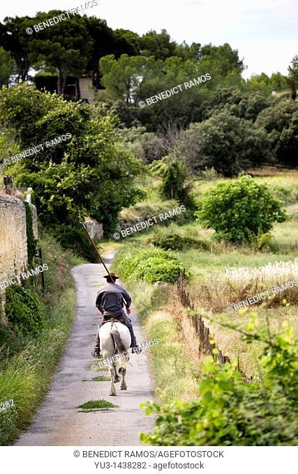 Gardian riding on Camargue pony and holding long stick to herd bulls, Aubais, near Nîmes, Gard, France