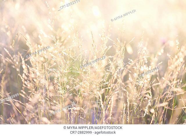 Nature bathing in golden light