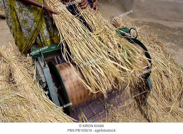 Women threshing paddy with machine Jhenaidah, Bangladesh May 2010
