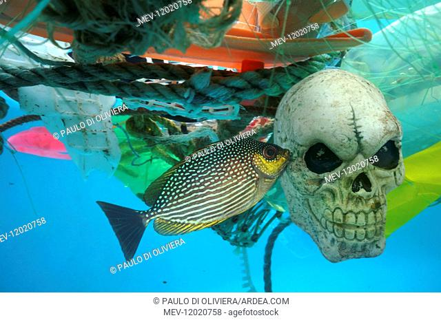 Concept image alluding to death caused by plastic garbage drifting in the oceans. Toy representing a skull in the middle of various plastic garbage floating in...