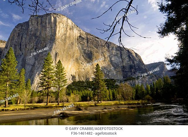 El Capitan on a Spring morning above the Merced River, Yosemite Valley, Yosemite National Park, California