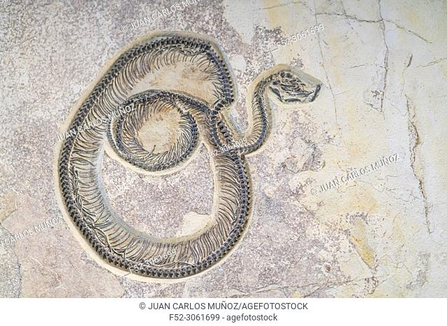 Snake fossil, Fossil Butte National Monument, Wyoming, Usa, America