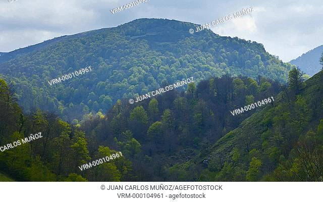 European Beech or Common Beech forest, Saja-Besaya Natural Park, Cantabria, Spain, Europe